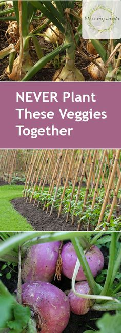 NEVER Plant These Veggies Together - Bless My Weeds