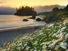 Summer at Trinidade Beach, California. Long Beach California, Northern California, Sea Flowers, Daisy Love, Pretty Backgrounds, Free Beach, Oregon Coast, Nature Wallpaper, Sunrise