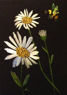 Bumble bee and Daisies