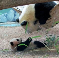 mommy takes good care of you!