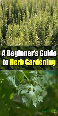 A Beginner's Guide to Herb Gardening - Easy Balcony Gardening - Garden Care, Garden Design and Gardening Supplies Garden Care, Garden Soil, Box Garden, Herbs Garden, Easy Garden, Diy Herb Garden, Smart Garden, Garden Arbor, Terrace Garden
