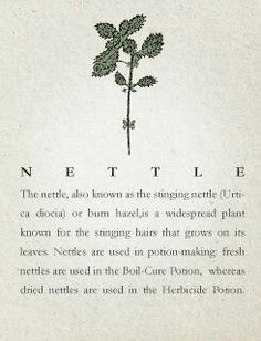 Stinging Nettle   - Pinned by The Mystic's Emporium on Etsy