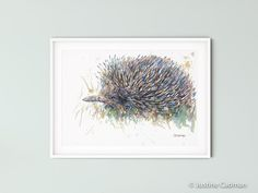 Watercolor Artwork, Watercolour, Original Artwork, Original Paintings, Australia Animals, Echidna, Wildlife Paintings, Unique Animals, Animal Cards