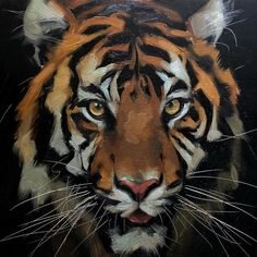 This pups finally ready to find a forever home! Big Cats Art, Cat Art, Tiger Painting, Painting & Drawing, Cool Art Drawings, Animal Drawings, Tatoo Tiger, Lion Photography, Tiger Pictures