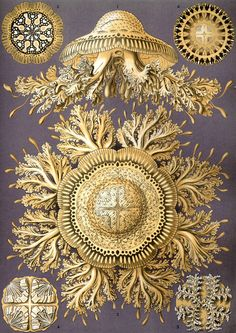 20 Vintage Nature Graphics - Ernst Haeckel - Free |Public Domain Images