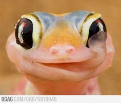 Awesomely Photogenic Lizard
