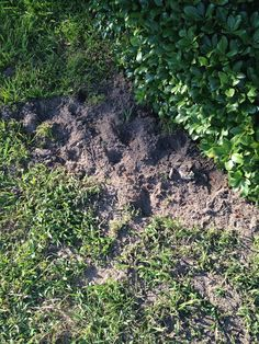 Day 155 (6/5). The day our beautiful lawn was ruined, because they had to dig up the septic tank. I got to stay home from work and wait for the septic guy- my new hero.