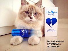 08170841296, Parfum Cinta Murah Original