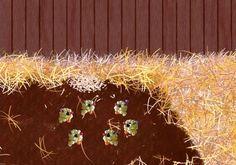 Május első vasárnapja - Mesés gyöngyök - Gyöngycsibék Kari, Dandelion, Flowers, Plants, Dandelions, Florals, Plant, Flower, Bloemen