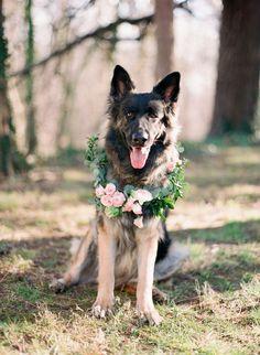 A happy dog adorned with a pretty floral wreath {Photo by Marta Locklear via Project Wedding}