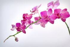 Orchid is an exotic flower which represents rare and delicate beauty. Description from onlinefloristindia.com. I searched for this on bing.com/images