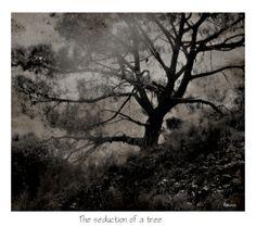 DIGITAL ART  PhotoArt -Elizabeth Mansco-The seduction of a tree