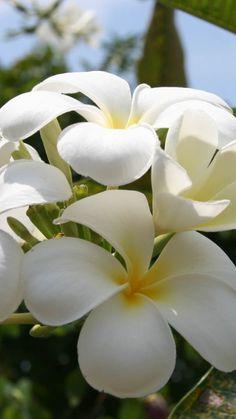 flores, pétalas, ramos, plantas