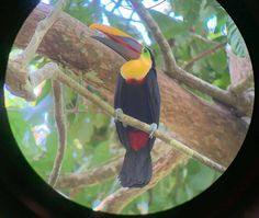 Puerto Jimenez: Authentic Costa Rican Experience - Seek and Wonder Corcovado National Park, Dolphin Tours, Sustainable Tourism, Yoga Retreat, Best Hotels, National Geographic, Costa Rica, Kayaking, Travel Guide