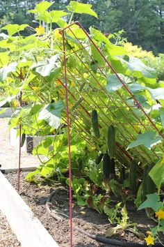 Cucumber Trellis - Large | Powder Coated Steel | Gardener's Supply: