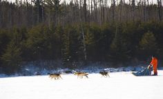 Dogsledding in north