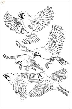 "Photo from album ""Воробьи"" on Yandex. Bird Drawings, Easy Drawings, Animal Drawings, Pencil Drawings, Bird Sketch, Bird Applique, Japan Painting, Bird Art, Line Drawing"