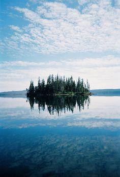 pine tree reflection