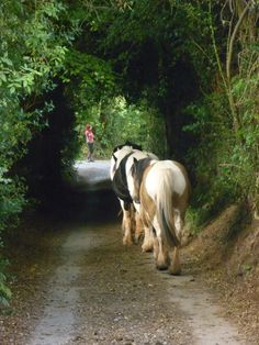 horses down the lane, must be dinner time.
