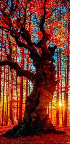 You are this tree. Describe the three most important aspects of your life. [Autumn forest near the Belintash Rock landmark in the Rhodope Mountains of Bulgaria Pretty Pictures, Cool Photos, Beautiful World, Beautiful Places, Beautiful Sunset, Beautiful Forest, Beautiful Beautiful, Autumn Forest, Jolie Photo