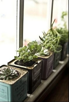 Herbs in interesting containers give great benefit to different senses.