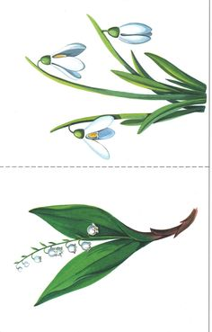 Preschool Learning Activities, Spring Activities, Plant Leaves, Education, Flowers, Cards, Plant, Spring, Nature