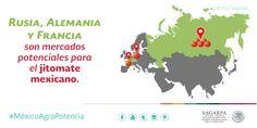 Rusia, Alemania y Francia son mercados potenciales para el jitomate mexicano. SAGARPA SAGARPAMX #MéxicoAgroPotencia