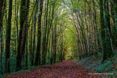 Autumn in the west of Ireland, Co. Mayo. #landscapephotography #ireland #trees #woodland