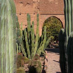 #Cactus #garden at Musée de la Palmeraie in #Marrakech #Maroc #Morocco #travel #travelphotography #voyage #magazine #ipad #nowmaroc