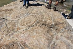 Cambrian algal mounds from the Wilburns Formation, Texas.