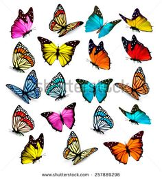 Find Big Collection Colorful Butterflies Vector stock images in HD and millions of other royalty-free stock photos, illustrations and vectors in the Shutterstock collection. Thousands of new, high-quality pictures added every day. Cartoon Butterfly, Butterfly Logo, Butterfly Images, Blue Butterfly, Monarch Butterfly, Illustration Papillon, Butterfly Illustration, Watercolor Illustration, Butterflies Flying