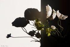 Ombre et lumière sur fleur artificielle
