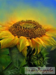 Gallery.ru / Фото #35 - Потрясающие цветы от Кэрола Каваларис - ninatela