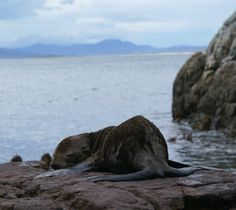 Sleepy seal on the edge of the world, at peace. Natural Beauty, Seal, My Photos, The Past, World, Water, Outdoor, Gripe Water, Outdoors