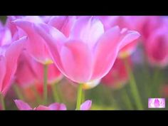 ♥ Goddess of Harmony daily invocation to the 13 Goddesses to be free of ...