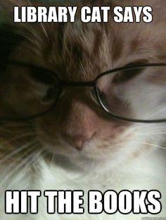 library cat memes | quickmeme