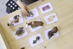 """Dieses Spiel ist ein Volltreffer: Kindern macht es Spass, sie üben Ordnen sowie Kategorisieren, trainieren ihre Feinmotorik und obendrauf noch die Sprache. Die ganze Idee mit genauer Anleitung findest Du hier. Die Druckvorlage zum Thema """"Was Tiere essen"""" findest Du hier. Klicke auf das Bild, um das PDF herunterzuladen. Weitere Vorlagen Sieh Dir auch unsere …"""