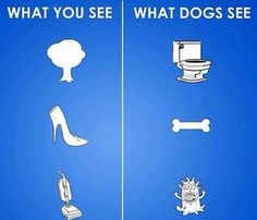 What you see and what dogs see