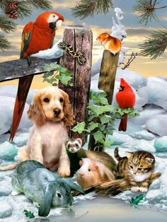Winter Warmth 1000 Pc Jigsaw Puzzle by SunsOut Christmas Animals, Christmas Cats, Beautiful Birds, Animals Beautiful, Animals And Pets, Cute Animals, Cute Animal Pictures, Dog Art, Cute Art