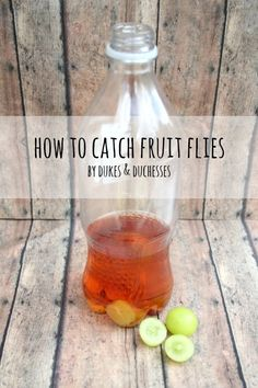 is sugar in fruit healthy how do you catch fruit flies