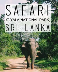 Safari at Yala National Park, Sri Lanka