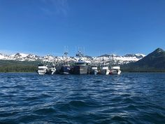 Independent wild and free! A fishermans lifes for me. Spent our 4th of July rafted up with fishing friends eating salmon and apple pie and lighting off flares for fireworks. Grateful for the sunny days on the ocean with family and friends and a great view all around us.  #aksalmonsisters #wildandfree #independenceday #100daysofsalmon #alaska