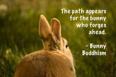 Arthur the bunny, Photo courtesy of Danica L. See more at http://bunnybuddhism.com/blog/2015/08/05/arthur/.