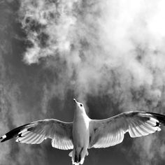 'Onward & Upward' by Heather King Heather King, Art Prints For Sale, Black And White Photography, My Best Friend, Black White Photography, Bw Photography