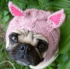 Google Image Result for http://www.aplacetolovedogs.com/wp-content/uploads/2012/01/pug-pig-hat.jpg