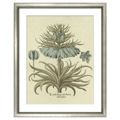 Check out this item at One Kings Lane! Basilius Besler, Botanical I 1613
