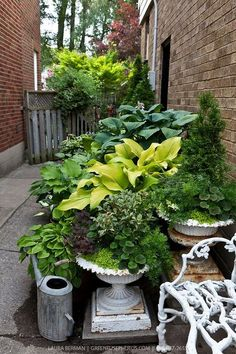 Side-yard #container #garden . #Hostas and other perennials, #annuals and #shrubs in cast iron urns in a sideyard container garden / Source: https://greenfusestock.photoshelter.com/gallery-image/Container-Gardens/G00007hLMwCR9cw4/I0000YtrpbzviX5s