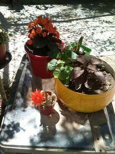 Moscow Mule Mugs, Tableware, Plants, Flowers, Dinnerware, Tablewares, Plant, Dishes, Place Settings