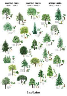 Skovdyrkernes plakat med Nordens træer :: Skovdyrkershop