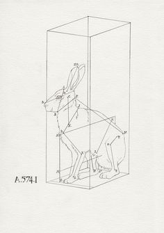 lapin owed to E.Thompson Seton by Peter Carrington Line Drawing, Drawing Sketches, Art Drawings, Hr Giger, Year Of The Rabbit, Collage, Line Art, Street Art, Illustration Art